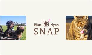 index_wan_nyana_snap