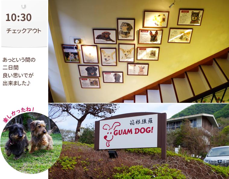 1605_Hakonegoura_Guam-dog016