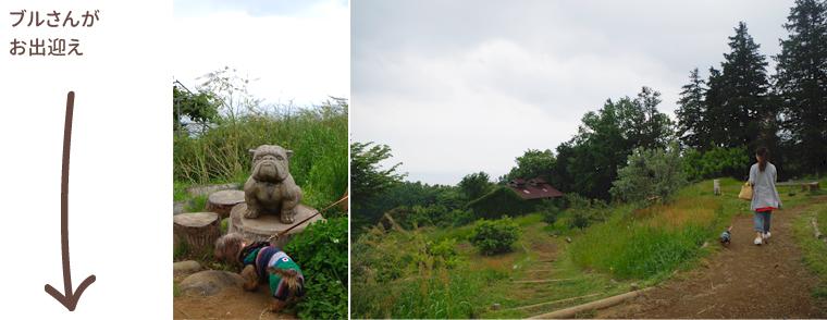 1605_odawara_yoroizuka-farm03
