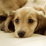 犬の迷子札はシルエットシリーズが人気