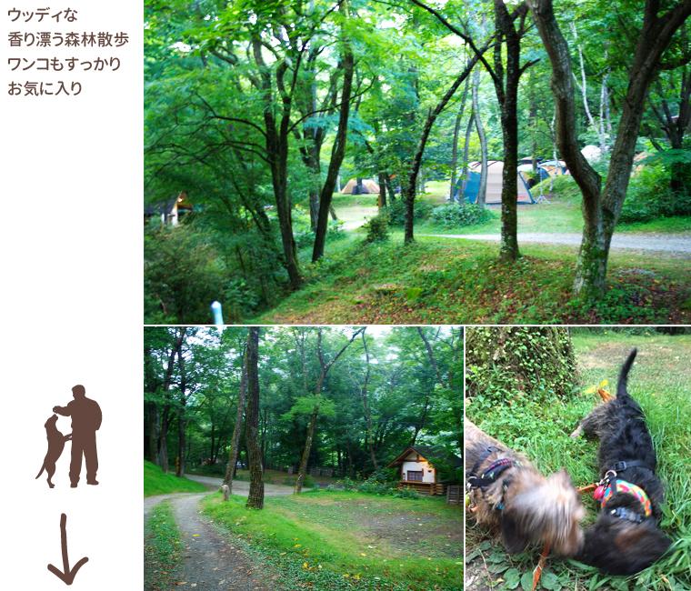 dog_trip04_miyashitahills_08