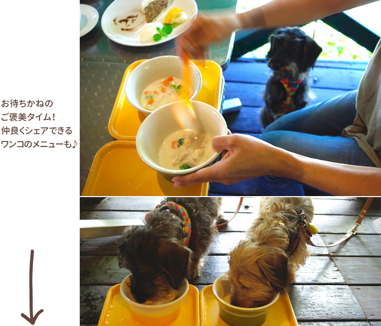 dog_trip05-02_merrygoround_013