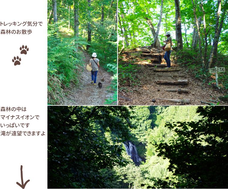 dog_trip05-02_moeginomura015