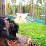 愛犬とノーリードで楽しめる、ドッグラン付きキャンプ場