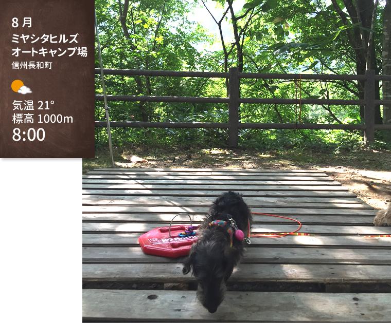 dog_trip05_miyashitahills_01