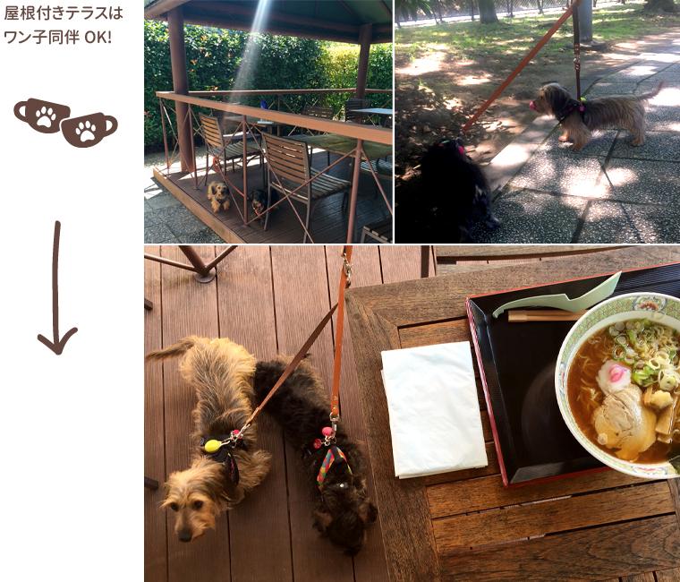 dog_trip05_syakadoupa02