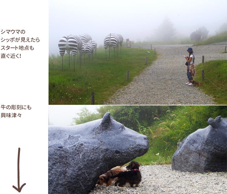 dog_trip05_utsukushigahara_014