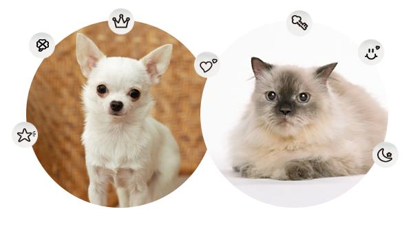 maigofuda_silver_dogcat_img