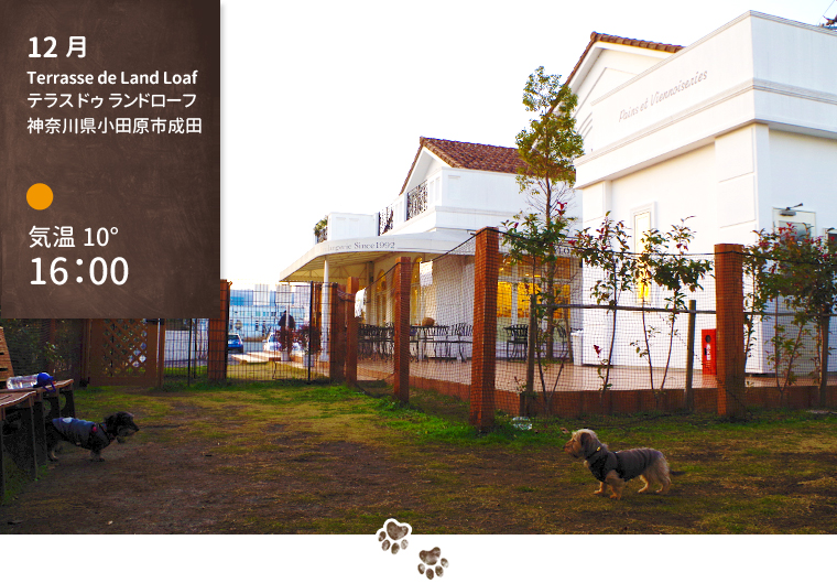 dog-trip08-odawara-dogrun-bakery-01