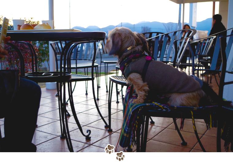 dog-trip08-odawara-dogrun-bakery-05