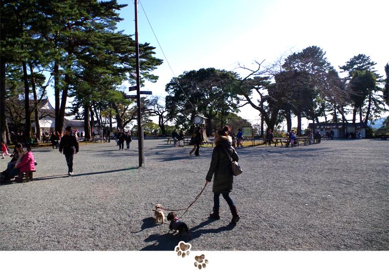 dog_trip07-odawarajyou08_