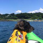 犬連れ本栖湖。ワンコと楽しむ日帰りカヌー&水遊び!