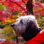 犬連れで楽しむ紅葉散歩。道志の森キャンプ場。