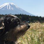 犬連れ朝霧高原。新緑キャンプとランチビュッフェを楽しむ犬連れの旅