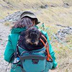 犬連れ車山高原。愛犬と楽しむハイキング&カフェタイム
